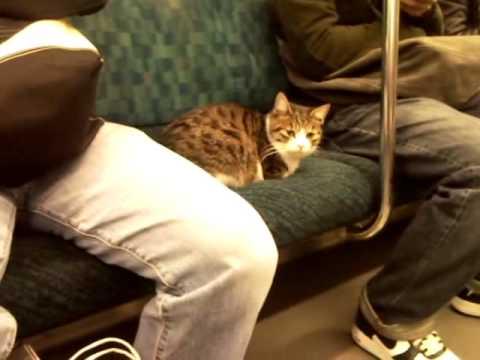 電車に乗る猫さんがかわいいの画像