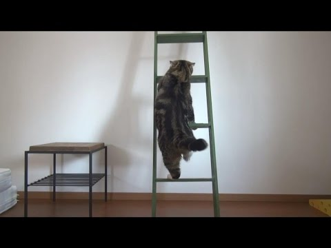 はしごとねこ2。 -Ladder and Maru&Hana.-