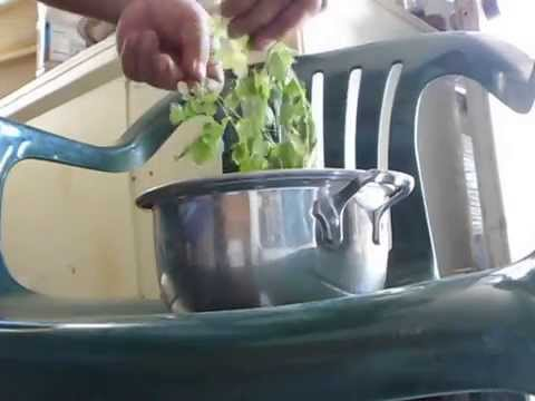 How To Dry Moringa to make powerful powder nutritious supplement