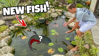 BUYING *NEW* CATFISH for My FrontYard POND!!!
