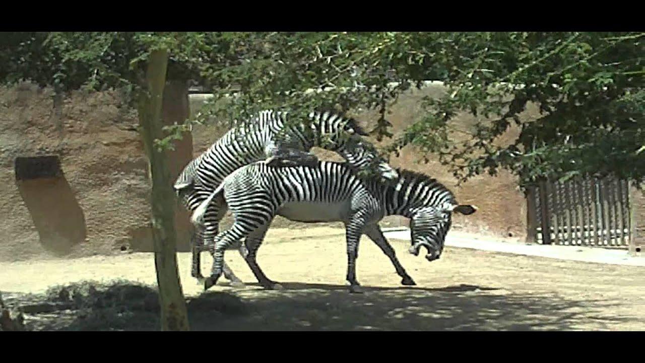 Horse  Zoo SeX TUBE  zsxtubecom