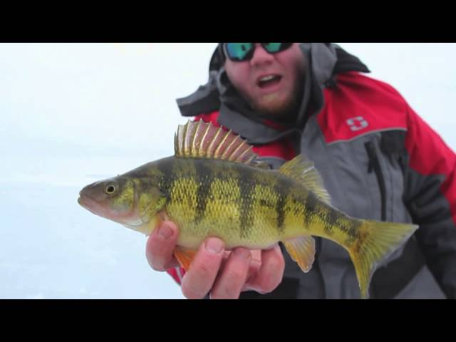 Mille Lacs Jumbo Perch