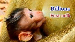 Good sign.. Baby Billiona gets plenty of milk   Young mom Belley good in breast feed
