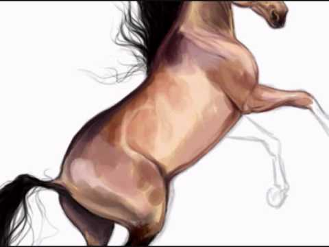 White Mustang Horse Drawing Mustang Horse Drawings a