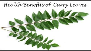 करी पत्ते के फ़ायदे | Health Benefits of Curry Leaves ( Curry Patta) for weight loss &  hair fall