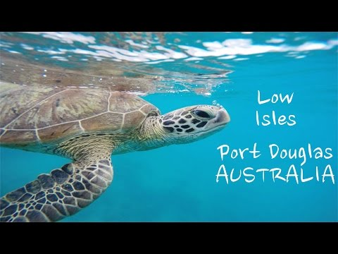 Sailaway Low Isles Cruise ~ Tourists,Trout and Turtles