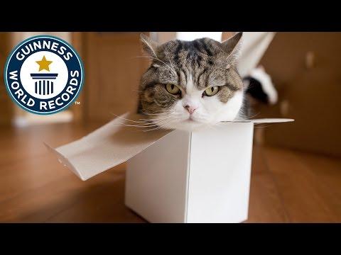 Maru, el gato japonés con el récord de animal más visto en Youtube