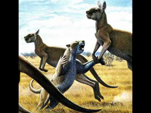 Megalania vs marsupial lion - photo#7