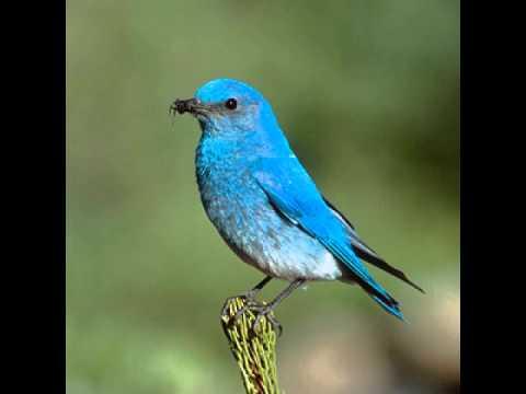 Neil Young - Beautiful Bluebird
