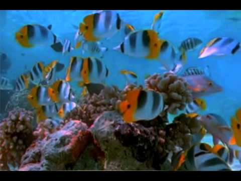 Wave Sounds For Sleep >> schools of fish swimming in the ocean near a reef - YouTube