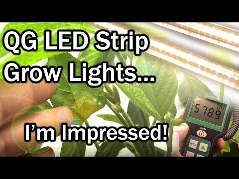 QG LED Grow Lights Review w/Grow Results (Soybean - Edamame)
