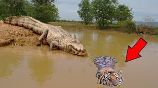 LIVE: You Wouldn't believe this if it Wasn't Recorded | Crazy Moments Of Wild Animals 2018
