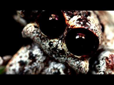 Eleventh Sun - Spider