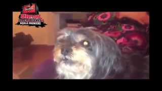 Dog Loves Doritos an not Bacon - Crash the Super Bowl 2015?