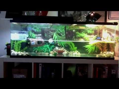 Red eared slider and fish tank