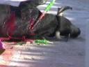 Miniatura del vídeo El arte de la tortura