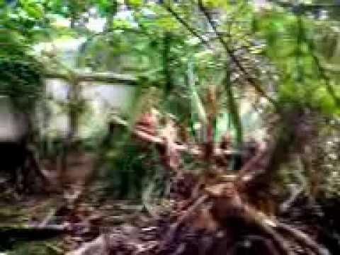 Tuyul di Kota Palu
