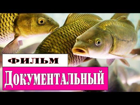 Рыболовы. Теория заговора. (HD) Где бля# рыба? Документальные фильмы 2015