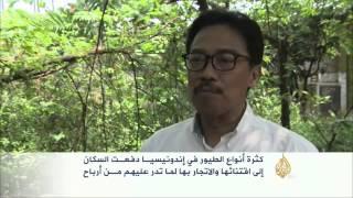 ثقافة اقتناء الطيور وتربيتها بإندونيسيا