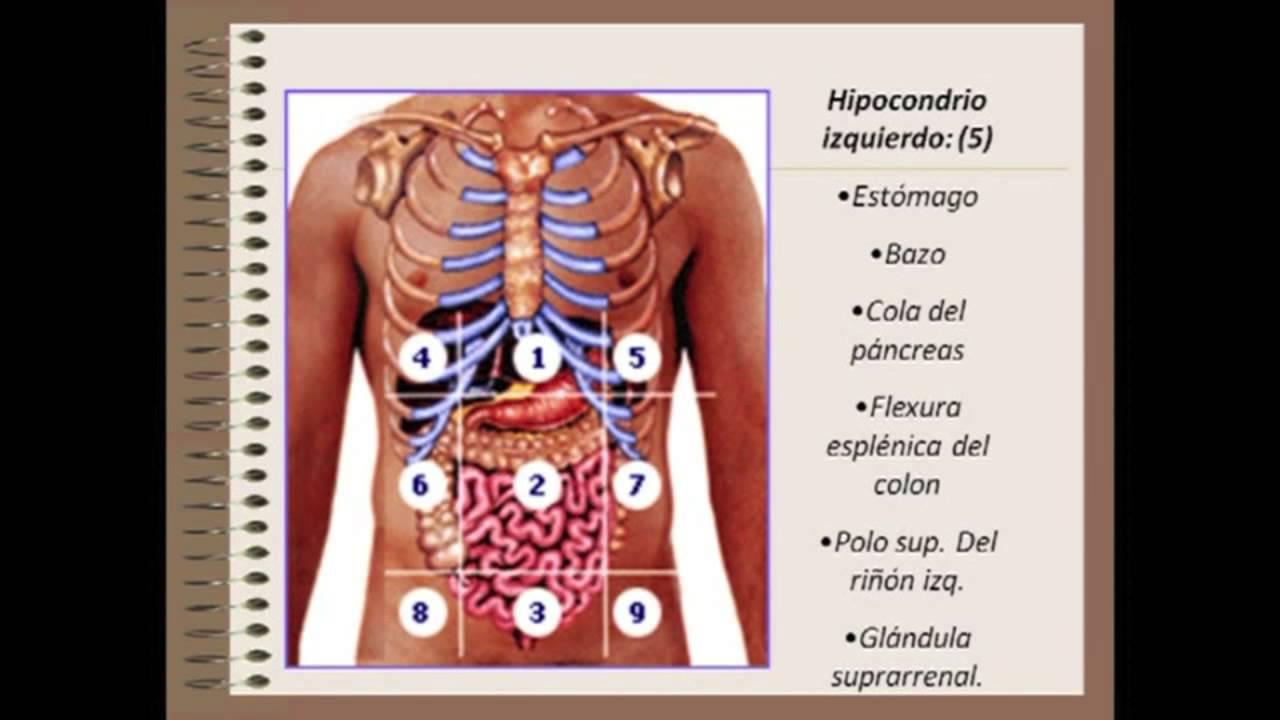 Cuadrantes abdominales y sus organos