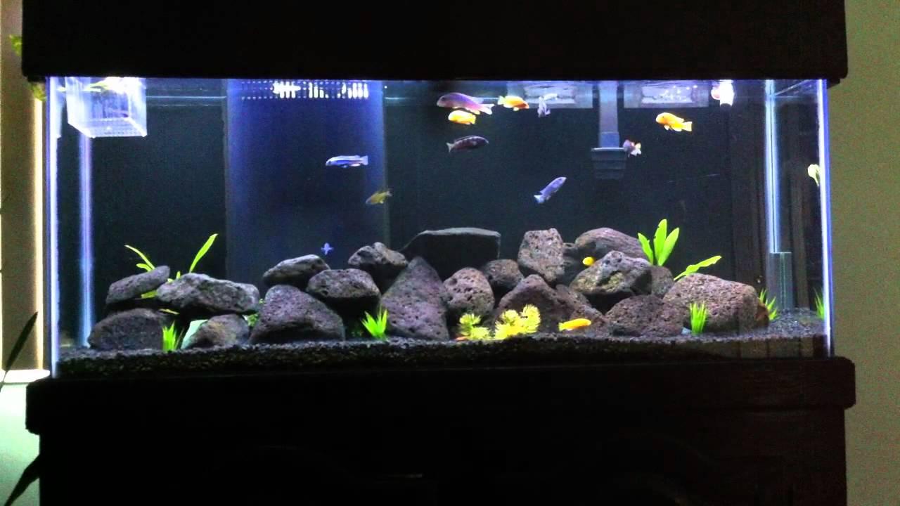 55 gallon mbuna african cichlid fish tank youtube for 55 gallon aquarium decoration ideas