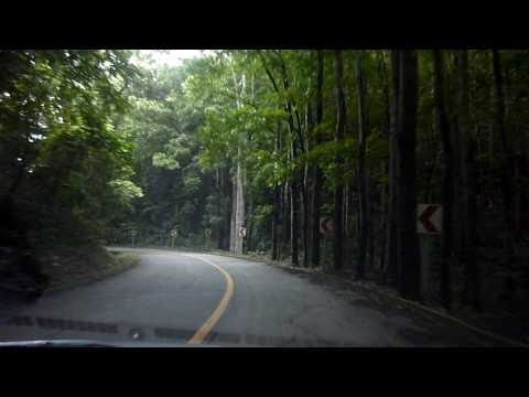 Tours of the Philippines - Man-made Forest in Bohol, Philippines