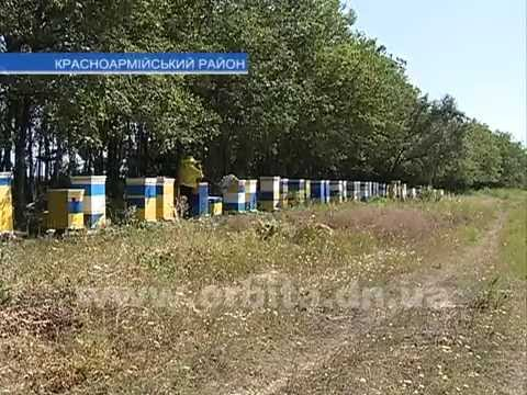 4 тонны мёда отправят на экспорт с Красноармейской пасеки