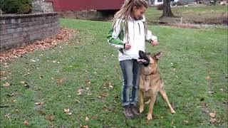 German Shepherd Koda Tricks!