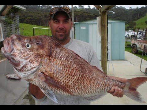 REEL KIWI FISHING - Big far North Snapper and Kings with NZ Fishwhisperer