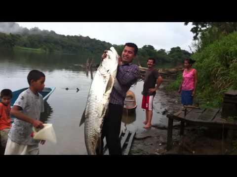 Pesca .. el sabalo mas grande del mundo... pez de rio mas grande del mundo Rio san Juan Nicaragua