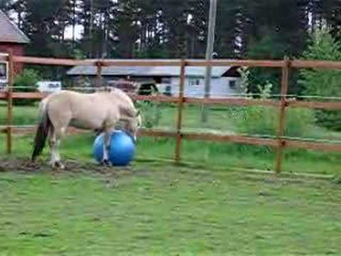 Funny horse video :  Ashley Uhrebro