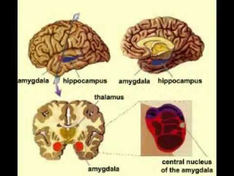 Brain damage data from marijuana use anti marijuana educational video