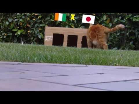 BRAZIL 2014 : CÔTE D'IVOIRE - JAPAN 2-1