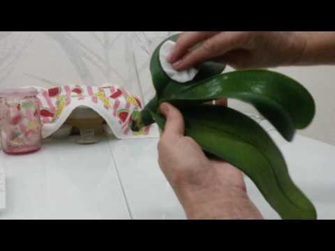 Самые интересные идеи Листья орхидея иНабор Гипс
