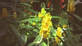 #5528, Flor amarilla de forma alargada [Efecto], Plantas y naturaleza