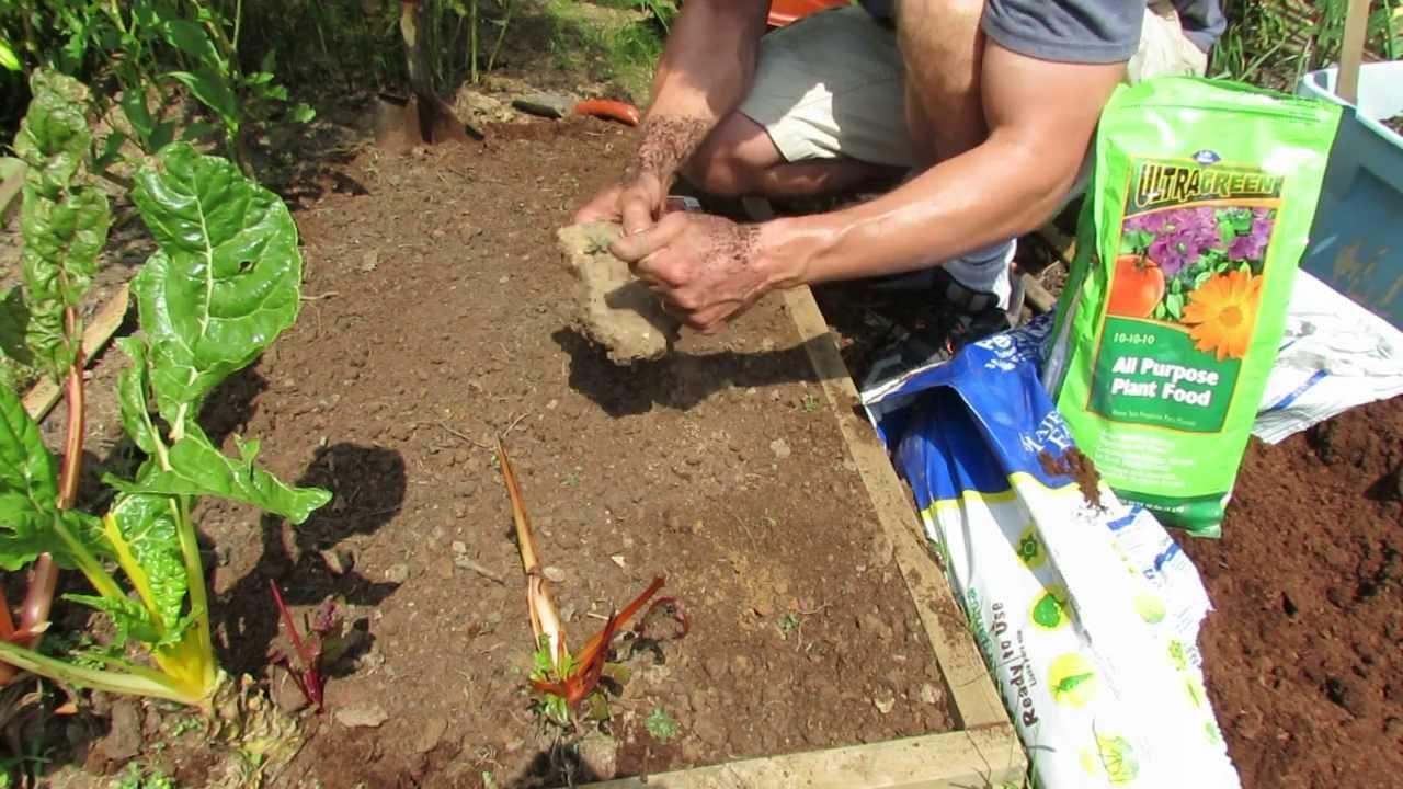 1 of 3 planting radishes preparing the soil and seed for Preparing soil for vegetable garden