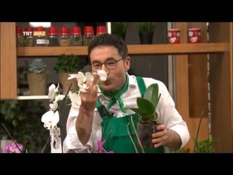 Orkide Bakımı Nasıl Yapılır? - Erkan Şamcı ile Doğal Yaşam - TRT Avaz