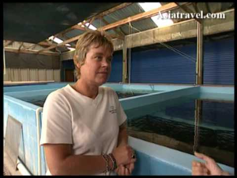 Fresh Water Prawns Farm By Asiatravel.com