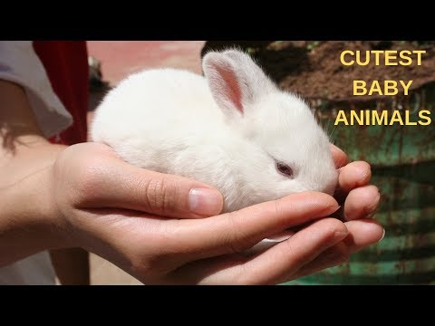2019 Cutest Baby Animals Ever Video Compilation Funny Cute Baby Animals #4