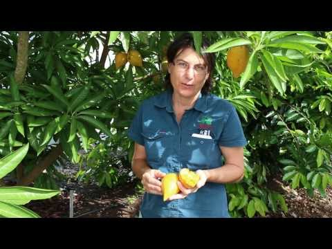 Where To Buy Pura Body Naturals Sapote Hair Lotion Review