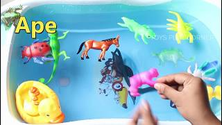 Learn Wild Animals Zoo Animals Sea Animals Farm Animals Insects Name for Kids Education Video