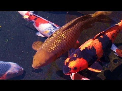 Zen Garden - Koi Pond Relaxation & Meditation (Full Length)
