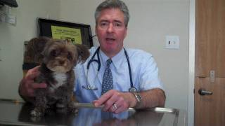 Characteristics of cancer in pets.mp4