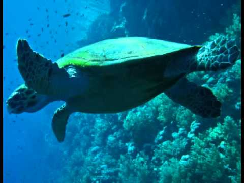 Sea Turtle Facts - Facts About Sea Turtles