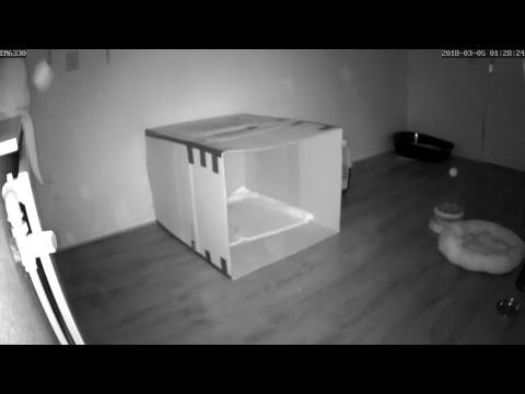 Kittenkamer Livestream