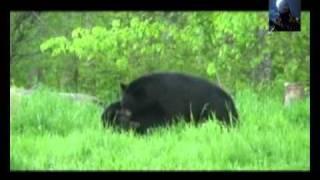 1Q Sapro - Ursu din Carpati [HD]