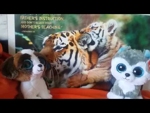 Bengals News by The Beanie Boos