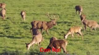 Video một số con vật sống trong rừng tiếng kêu và hình ảnh động vật sống trong rừng