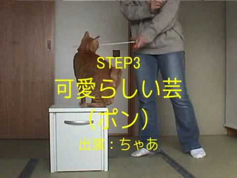 how to properly care for a cat
