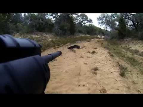 Graphic! Hog Hunting In Texas video